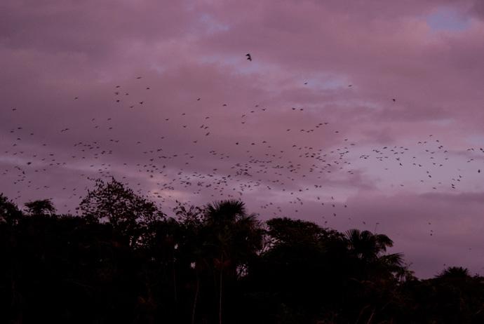 Brazilië: Ilha dos Papagaios