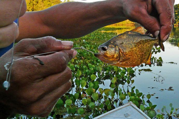 Bezienswaardigheden Pantanal, Brazilië