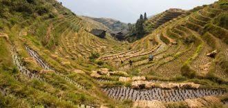 China: De rijstvelden van Longsheng
