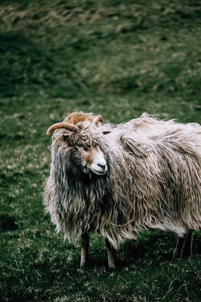 Kalsoy, Faeröer Eilanden