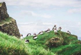 Faeröer Eilanden: Papegaaiduikers spotten op het eiland Mykines