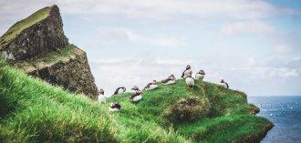 Puffins spotten op Mykines, Faeröer Eilanden
