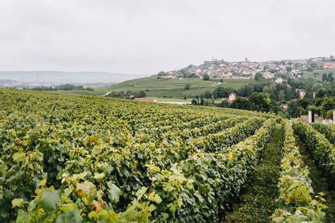 Roadtrip tussen de wijnvelden in de Champagnestreek