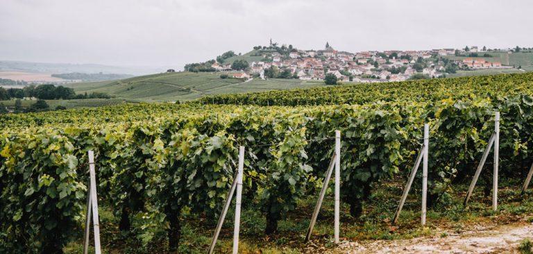 Champagne proeven in de Champagnestreek, Frankrijk