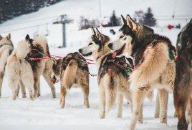 Zo mooi is een huskytocht in de Franse Alpen