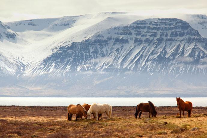 Op reis in de herfst: IJsland