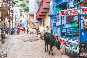 Tips en bezienswaardigheden Jodhpur, India