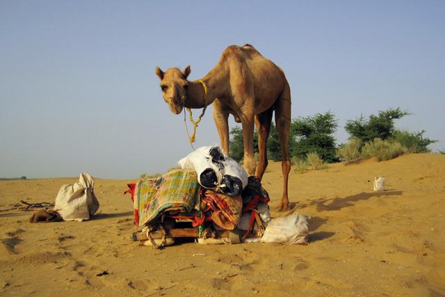 India: Slapen onder de sterren in de woestijn in Rajasthan
