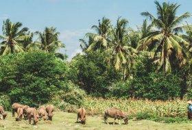 8 tips voor Lombok, Indonesië