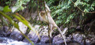 10 lessen die ik leerde tijdens een jungle trekking op Sumatra