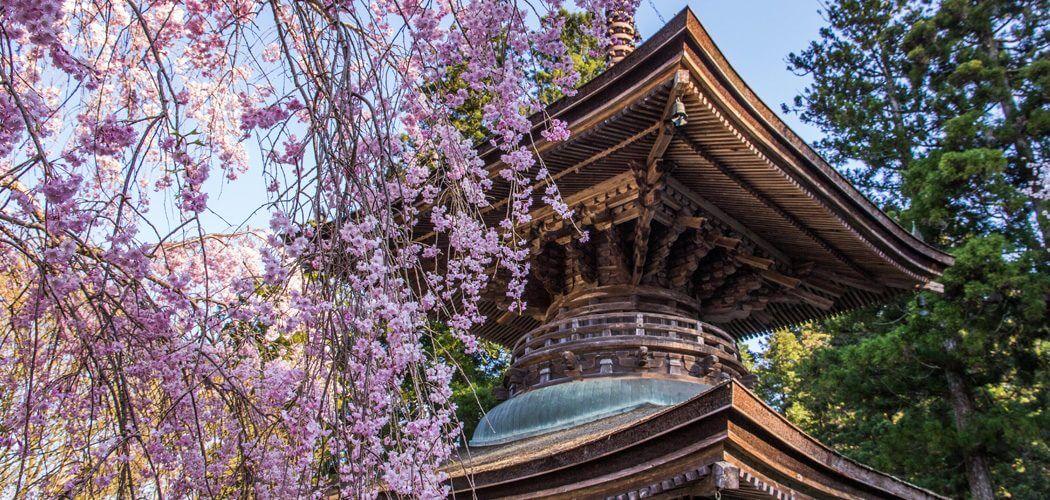 Hanami: 10 tips voor het bekijken van de kersenbloesem in Japan