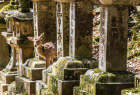 Japan: Nara en het dilemma van de 1200 heilige herten