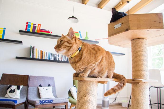 Kattencafe Neko no Niwa