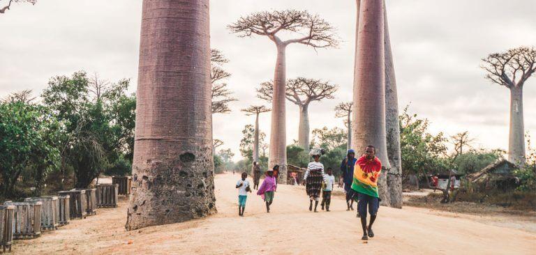 Allée des Baobabs in Madagascar