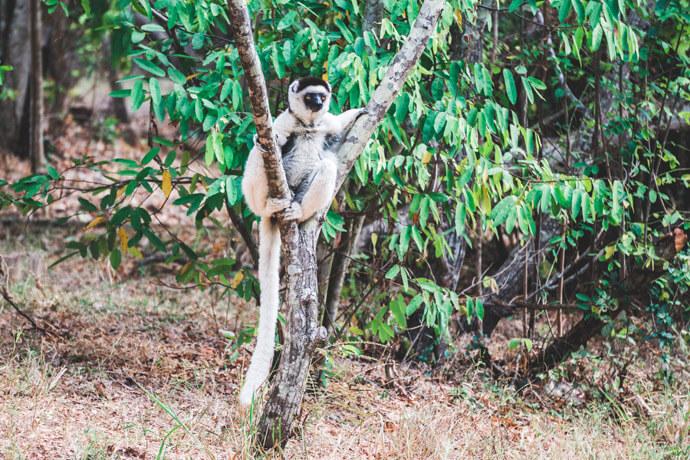 Isalo National Park bezoeken in Madagascar