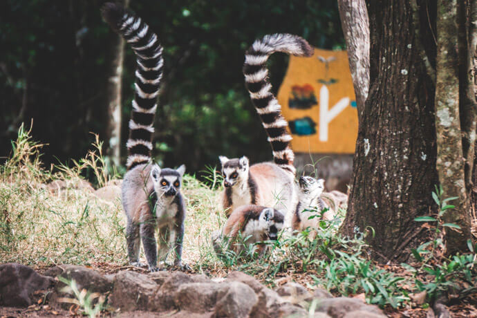 Isalo National Park bezoeken in Madagascar