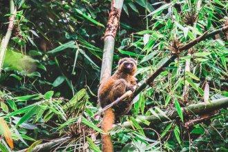 Ranomafana National Park, Madagascar