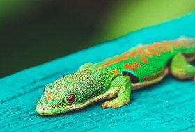 Dieren spotten in Madagascar: zet deze exemplaren op je lijstje