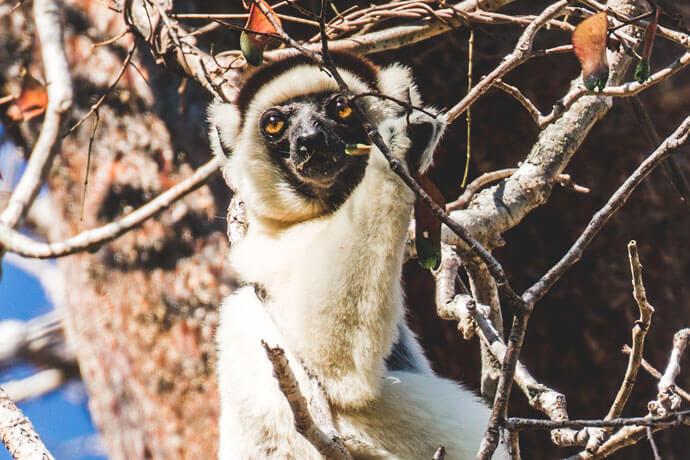 Wilde dieren in Madagascar