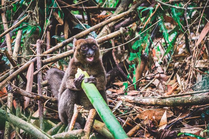 Madagascar bezienswaardigheden: Ranomafana National Park