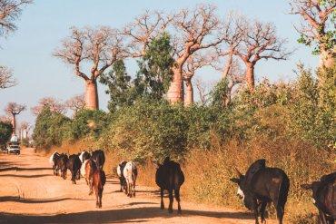Wat je kan overkomen tijdens een roadtrip door Madagascar