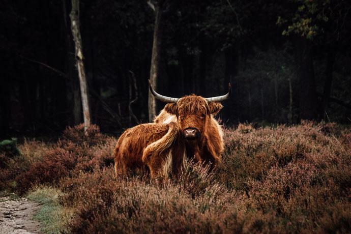 Mooiste plekken op de Veluwe: Deelerwoud