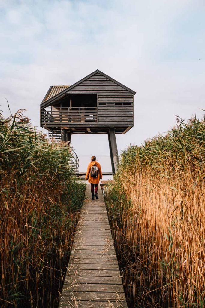 Vogelkijkhut Kiekkaaste in Nieuw-Statenzijl