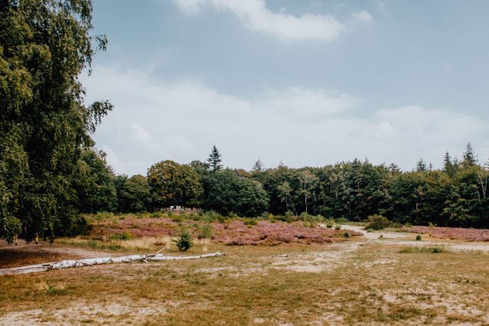 Heide in Utrecht: Kaapse Bossen