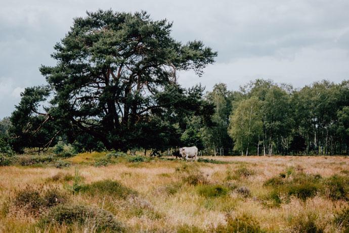 Heide in Utrecht: Lage Vuursche