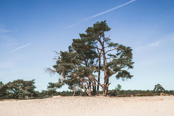 Mooie plekken in Utrecht: Soester Duinen