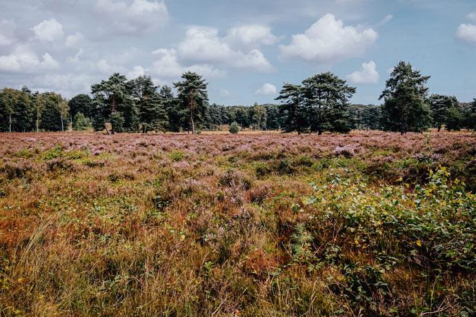 Heide in Utrecht: Krakelingse Bos
