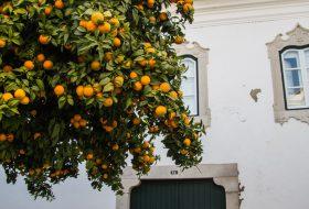 Portugal: 10 tips voor je stedentrip naar het mooie Faro