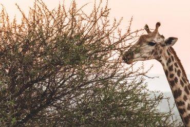 Reisvideo Zuid-Afrika