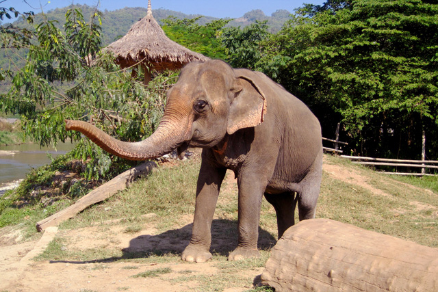 Thailand: Het Elephant Nature Park in Thailand