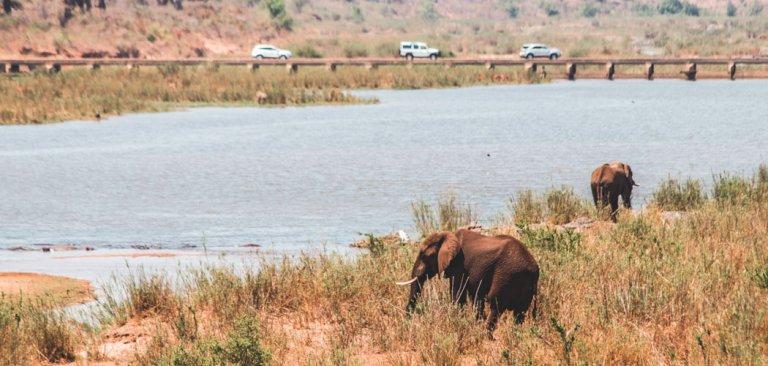 Tips voor het Krugerpark in Zuid-Afrika