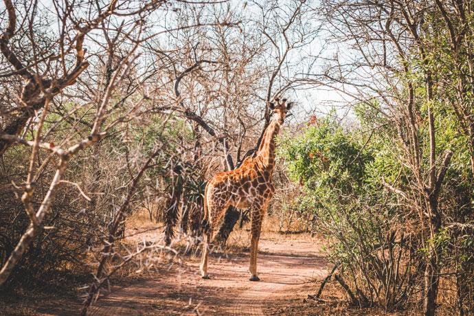 Route en planning voor een roadtrip door Zuid-Afrika (3 weken)
