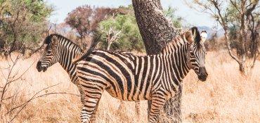 Self drive safari in Afrika