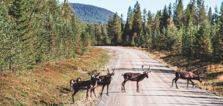 Wat te doen in Zweden deze zomer?