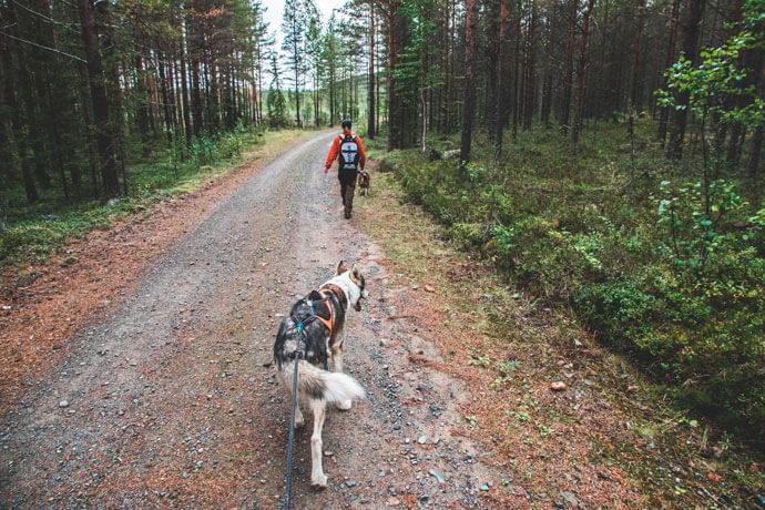 Wandelen met husky's in Zweeds Lapland