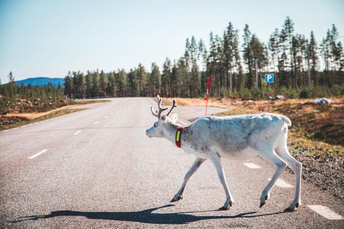 Route en planning: rondreis Zweeds Lapland
