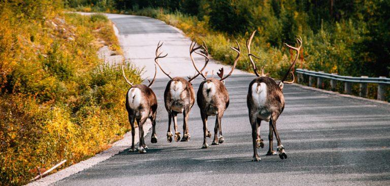 Hoe lang blijft het licht in Lapland?