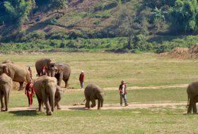 Thailand: Olifanten verzorgen in het Elephant Nature Park in Chiang Mai
